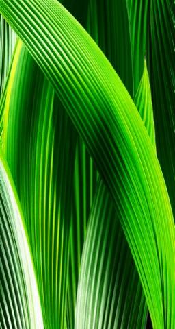 cubierto de hojas