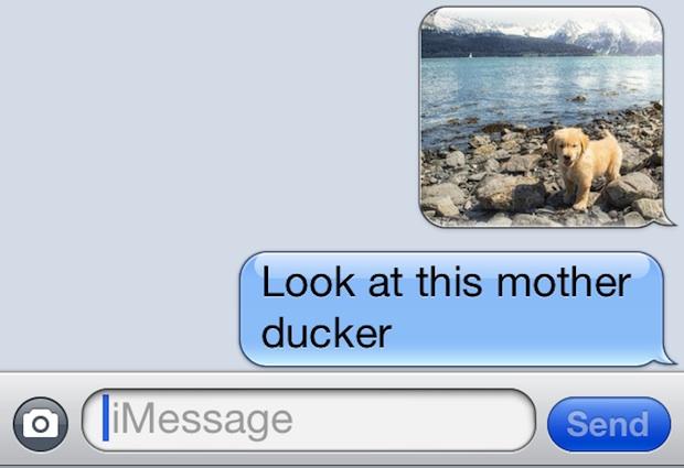 Mira esta madre pato